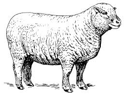Try our exotic meat for the month of September: Lamb
